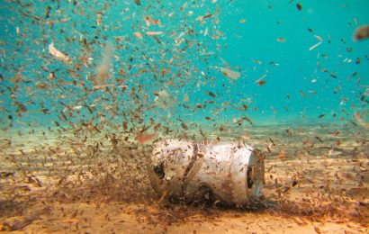 lattina sul fondo del mare