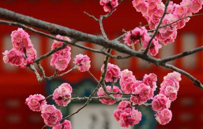 #Kyoto-Parigi. Un percorso pieno di contraddizioni