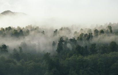 #Deforestazione, l'effetto refrigerante delle foreste sul clima