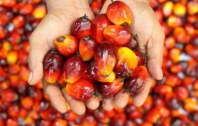 Biocarburanti e olio di palma: in Francia esplode la protesta