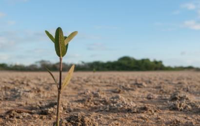 Adattarsi ai cambiamenti climatici: un fronte d'azione da non trascurare