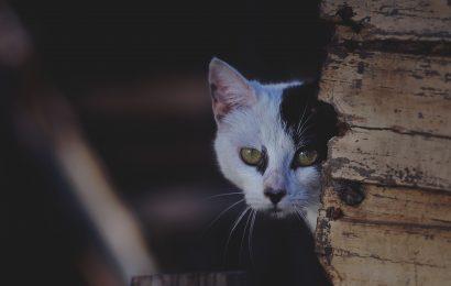 Non c'è trippa per gatti: il governo del cambiamento e le aziende partecipate