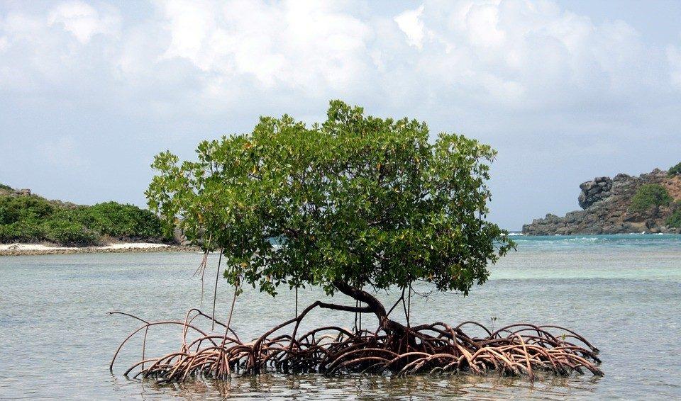 La crisi del clima: è tempo di adaptation