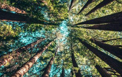 La crisi del clima: e se gli alberi fossero la soluzione?