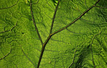 Finanza verde: cos'è e quali strumenti utilizza