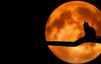 Il dito e la luna: conta più il consumatore o il venditore?