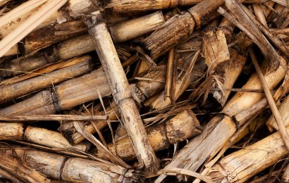 Biomasse lignocellulosiche e celle a combustibile di nuova generazione
