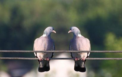 Due piccioni con una fava: biochar, fertilità del suolo e sequestro della CO2