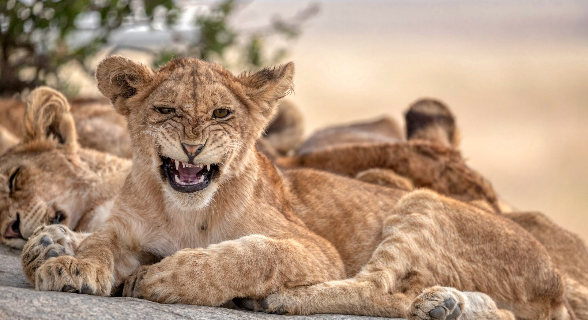 Da leone a erbivoro: ciò che non torna nella sentenza Shell